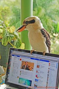 Check out this Feathered Facebook Fan
